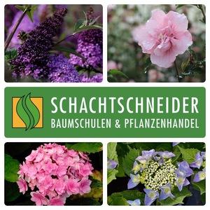 Logo Schachtschneider Baumschulen & Pflanzenhandel