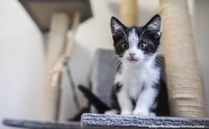 Einsatz für Tiere – wie der Deutsche Tierschutzbund arbeitet