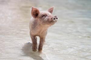 Tierrechte als Motivator - Wie PETA Deutschland arbeitet